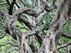 image of intertwined growth